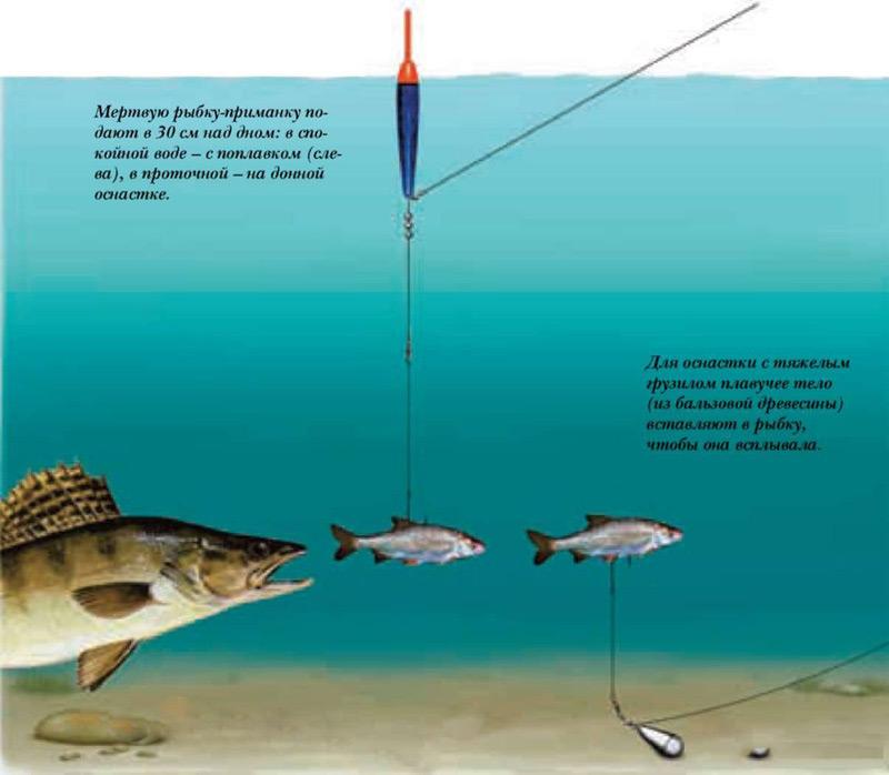 рыбалка на щуку как ловить