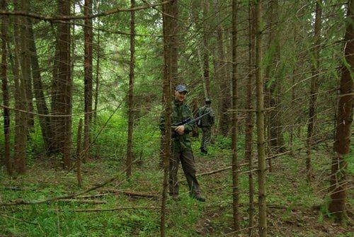 охотники подходят к лежкам