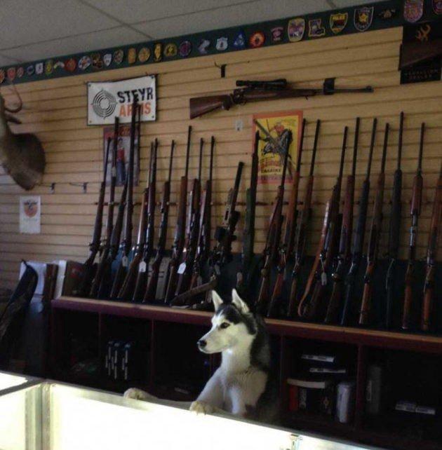Щенок и ружья