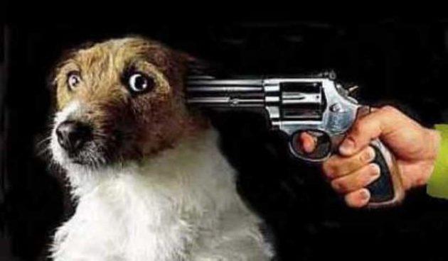 Собака и выстрел