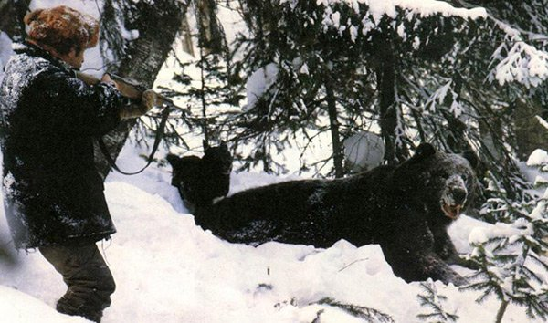 медведь на прицеле