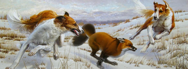 Собаки гонят лису