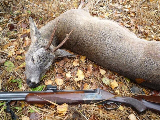 Выбор патронов для охоты на косулю