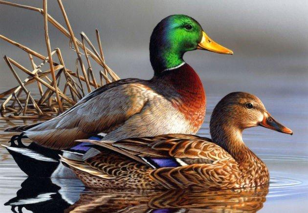 Открытие охоты осенью-зимой 2019 - 2020 года — какие сроки открытия осенней охоты по регионам?