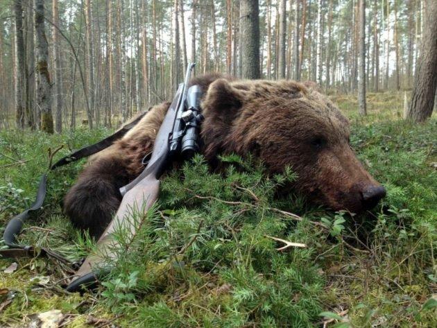 Выбор оружия для охоты на медведя