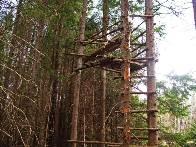 Укрытие для охоты на лося на дереве