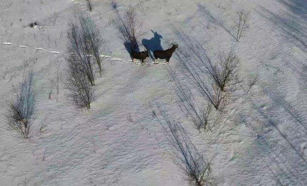 Выслеживание зверя с помощью квадрокоптера