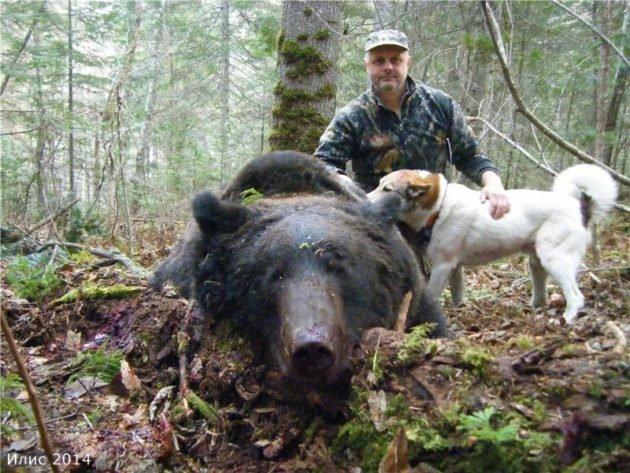 Охота на медведя по чернотропу