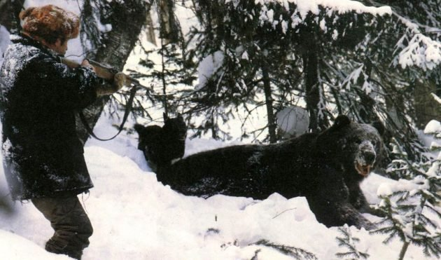 Охота на медведя в берлоге