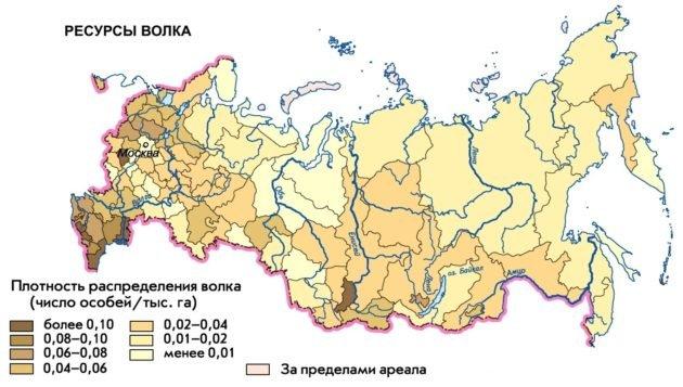 Ареал обитания волка в России