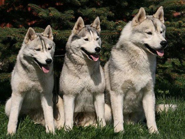 Породы охотничьих собак