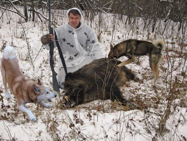 При охоте с собаками не рекомендуется использовать картечь