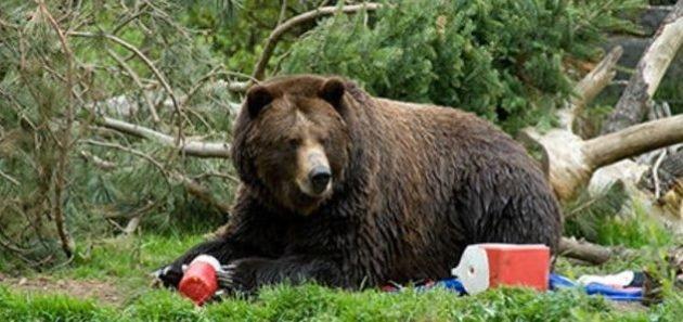 Нельзя прикармливать встреченного в лесу медведя