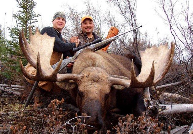 Трофейная охота на лося