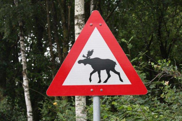 Дорожный знак предупреждающий о возможном появлении диких животных