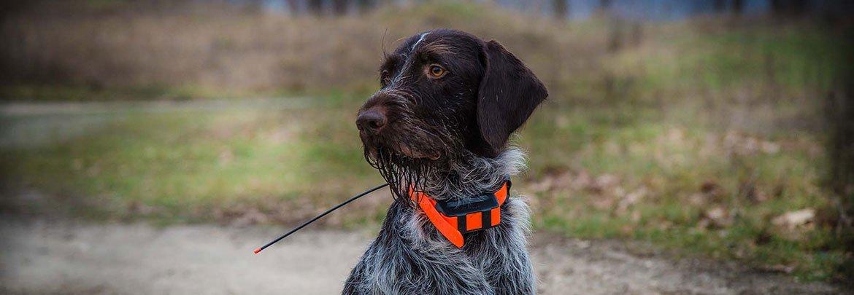 Отслеживание собаки по GPS