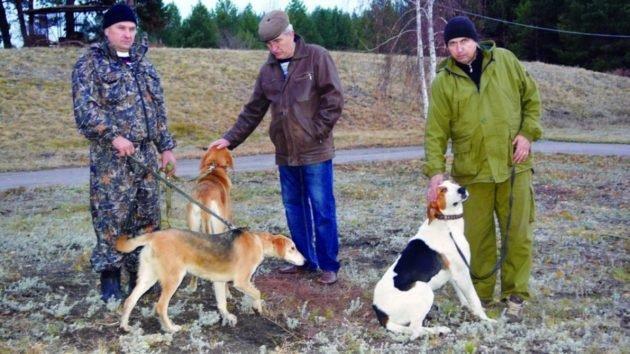 Проверка навыков охотничьих собак