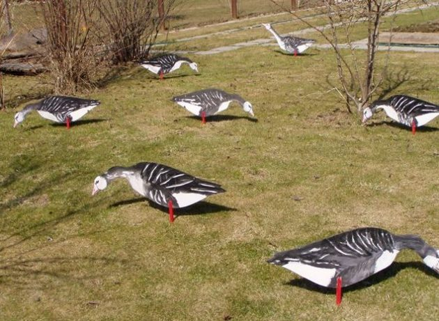 Профили птиц для охоты