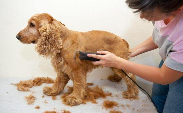 Стрижка шерсти у собаки