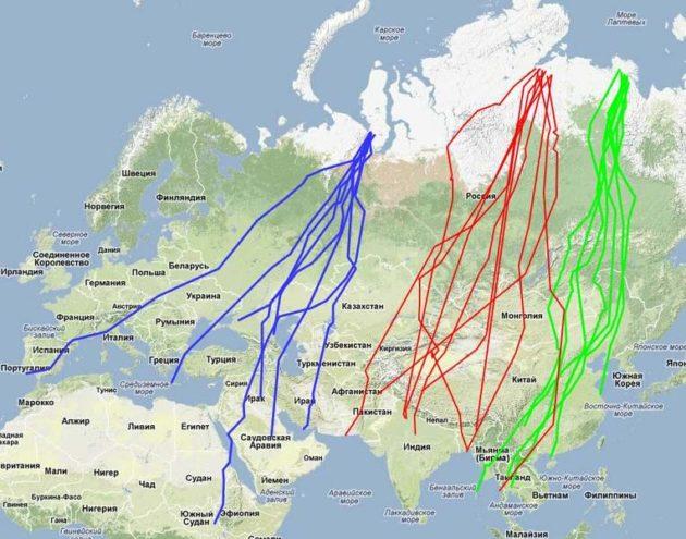Схема миграции гуся