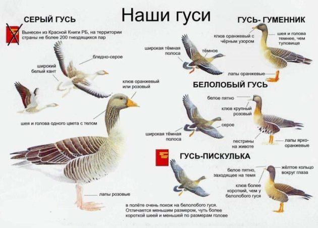 Виды диких птиц