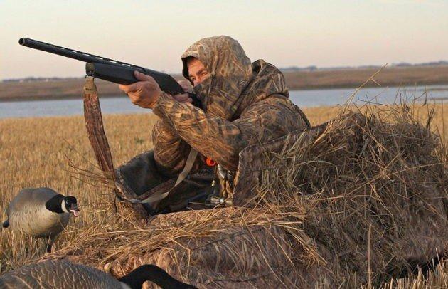 Охота на гусей весной