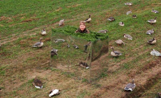 Зеркальная засидка на гуся