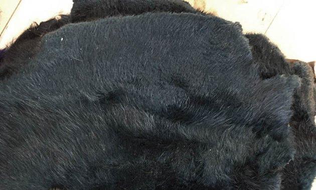 Зимний мех бобра