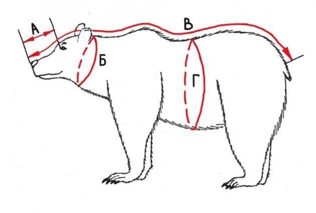 Схема разрезов на шкуре медведя