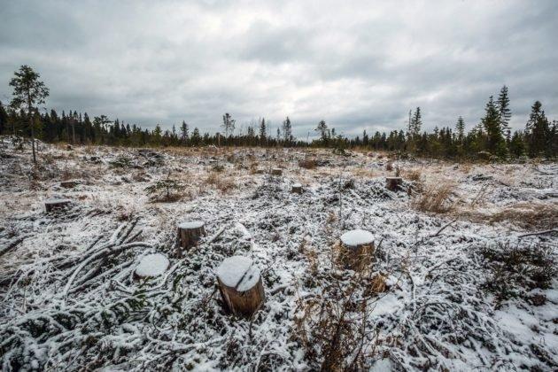 Из-за вырубок леса снижается популяция птиц