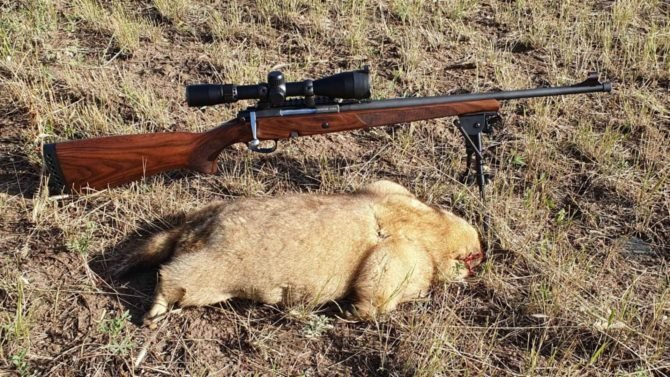 Охотники ценят Горностай за высокую надежность