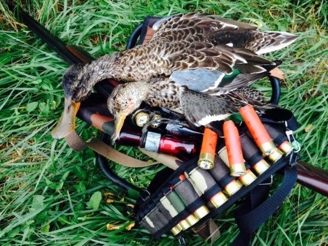 16 калибр обычно используется для охоты на мелкую дичь