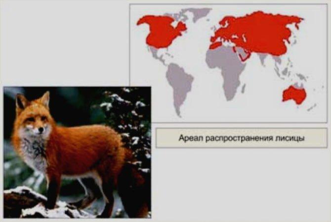 Ареал обитания обыкновенной лисицы