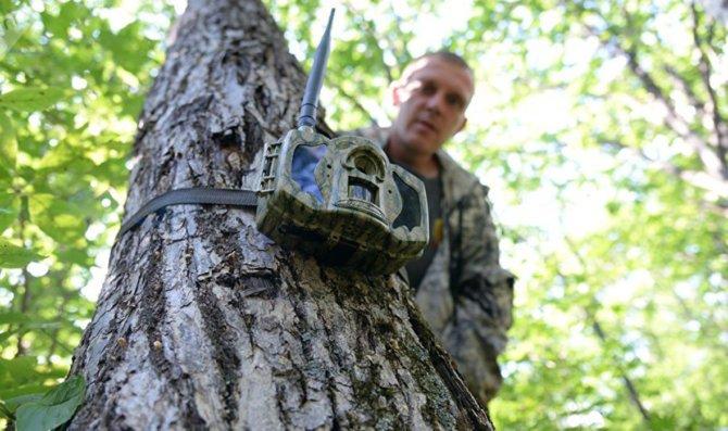 Фотоловушки могут использоваться для выявления случаев незаконной охоты