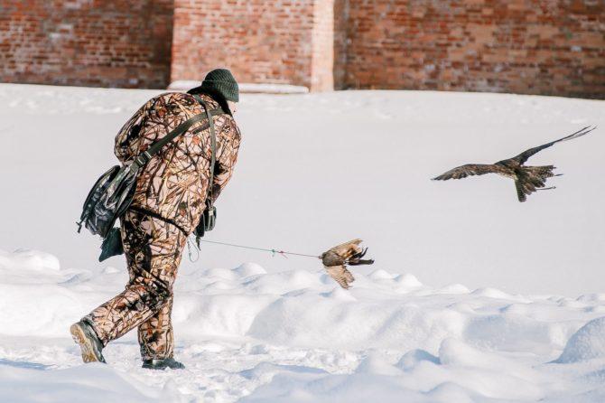 Натаскивание ловчей птицы на пернатую дичь