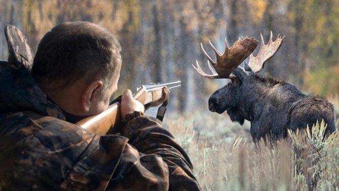 Охота на лося с ружьем 12-го калибра
