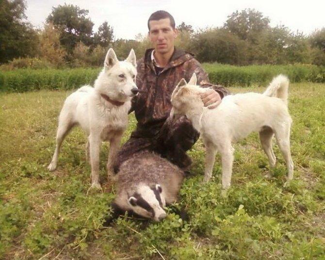 Охота с лайками