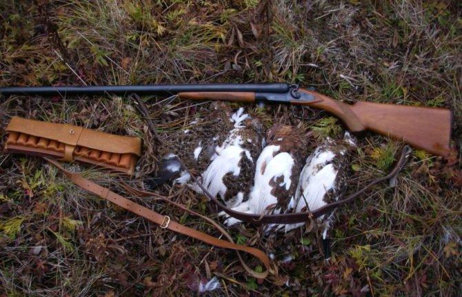 Оружие 16-го калибра часто используется для охоты на пернатую дичь