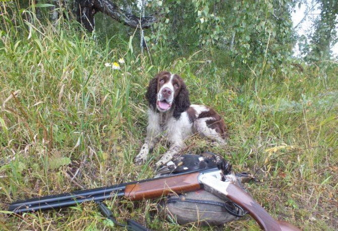 Ружье для ходовой охоты 12 калибра