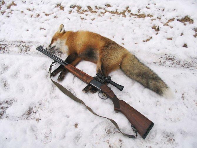 Убитая лиса