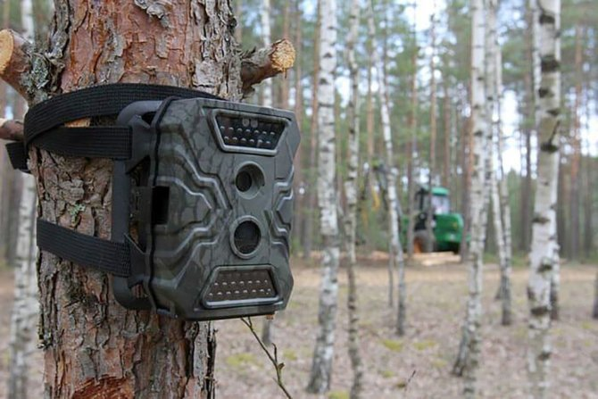 Установка фотоловушки в лесу на дерево