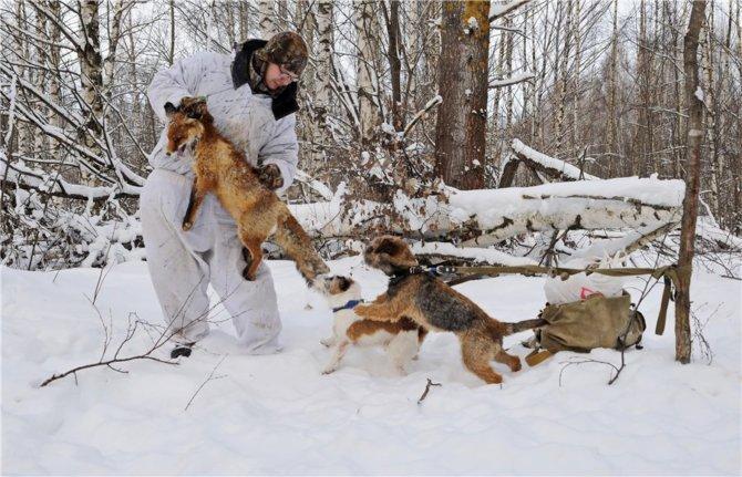 Зимняя охота с собаками