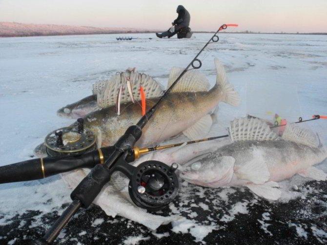Ловля судака на раттлин зимой