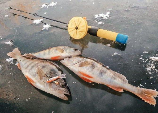 Ловля на раттлин на льду