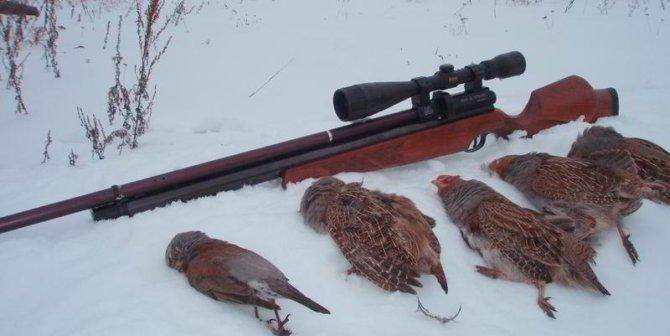сроки охоты на куропатку