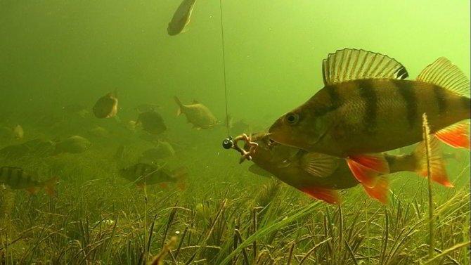 Съемка подводной рыбалки